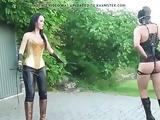 Chastity Dressage Training
